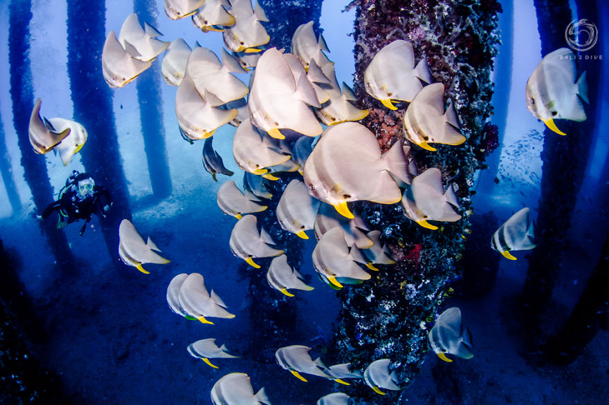 i-photographed-an-underwater-forest-in-bali-2__880