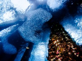 i-photographed-an-underwater-forest-in-bali-3__880