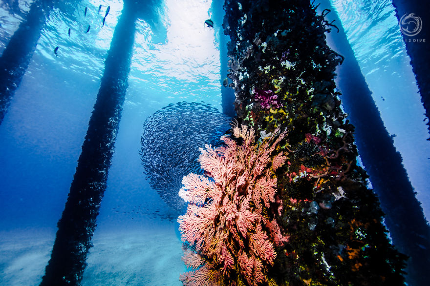 i-photographed-an-underwater-forest-in-bali-5__880