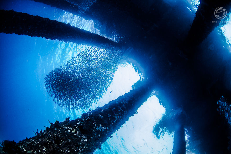 i-photographed-an-underwater-forest-in-bali-8__880
