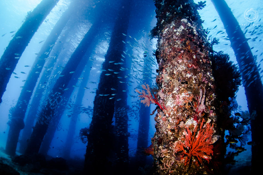 i-photographed-an-underwater-forest-in-bali__880