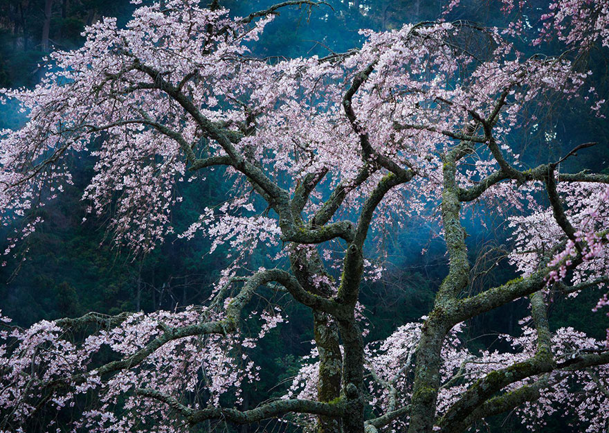 national-geographic-travel-photographer-of-the-year-contest-2016-51-572c45e6a22ad__880